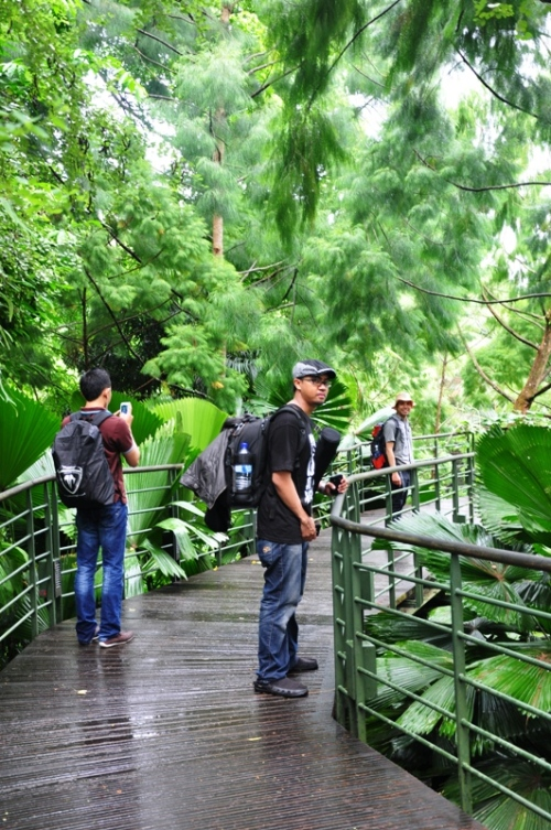 National orchid garden 8