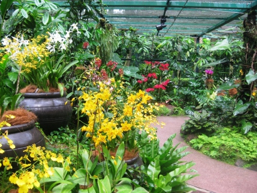 National orchid garden 9