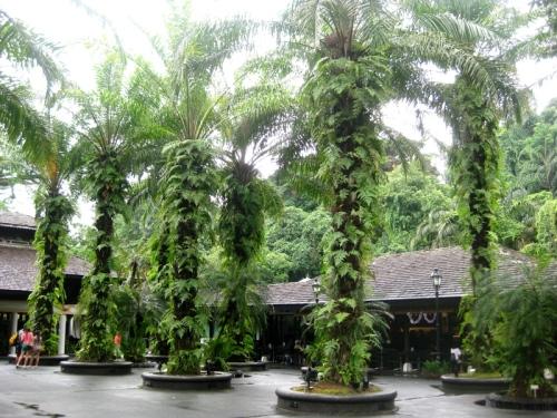 singapore botanic gardens 2