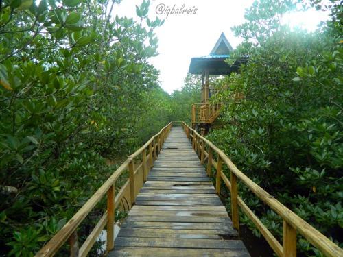 Wisata Hutan Mangrove Sei Carang