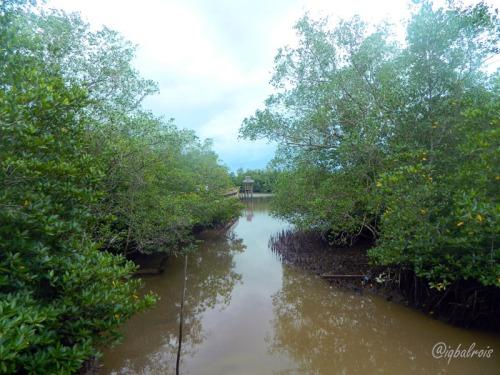 mangrove sei carang 5