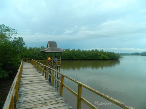 mangrove sei carang 6
