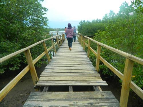 mangrove sei carang 7