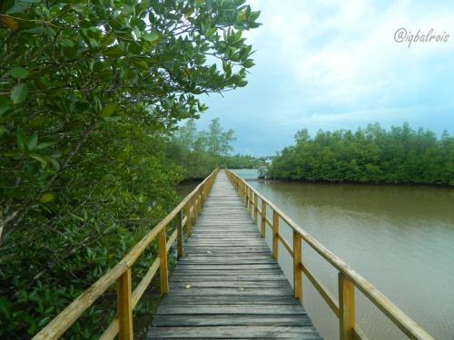 wisata mangrove sei carang