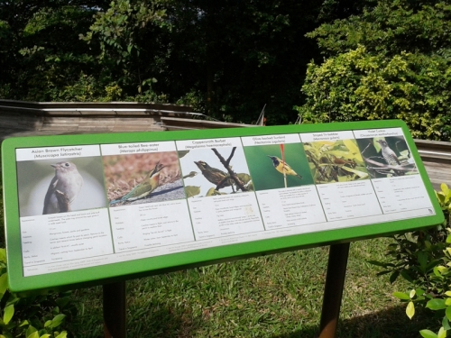 birds species may see here