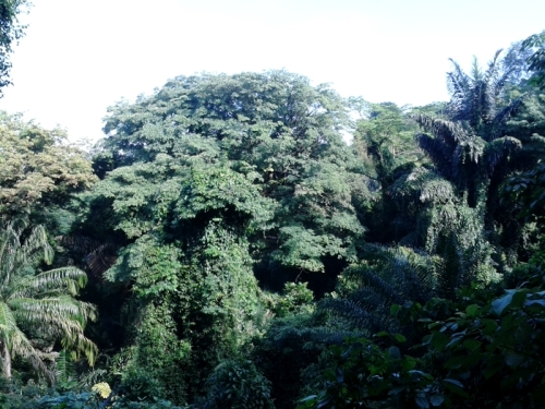 hutannya..